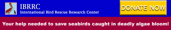 International Bird Research Rescue Center