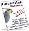 Cockatiel Secrets - Everything you should know about cockatiels!